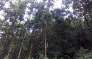 वन, वन्यजन्तु र मुहान संरक्षणमा महिला